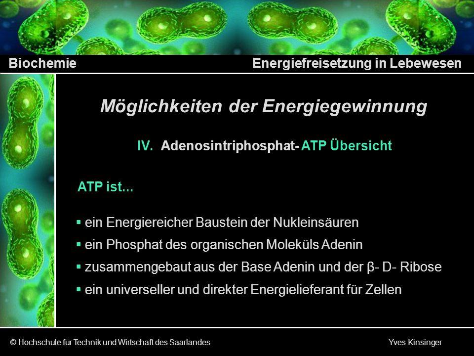 Biochemie Energiefreisetzung in Lebewesen © Hochschule für Technik und Wirtschaft des Saarlandes Yves Kinsinger Möglichkeiten der Energiegewinnung IV.