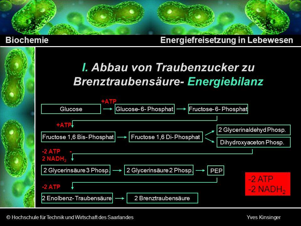 Biochemie Energiefreisetzung in Lebewesen © Hochschule für Technik und Wirtschaft des Saarlandes Yves Kinsinger I. Abbau von Traubenzucker zu Brenztra