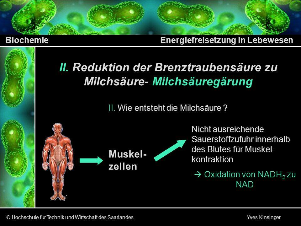 Biochemie Energiefreisetzung in Lebewesen © Hochschule für Technik und Wirtschaft des Saarlandes Yves Kinsinger II. Reduktion der Brenztraubensäure zu