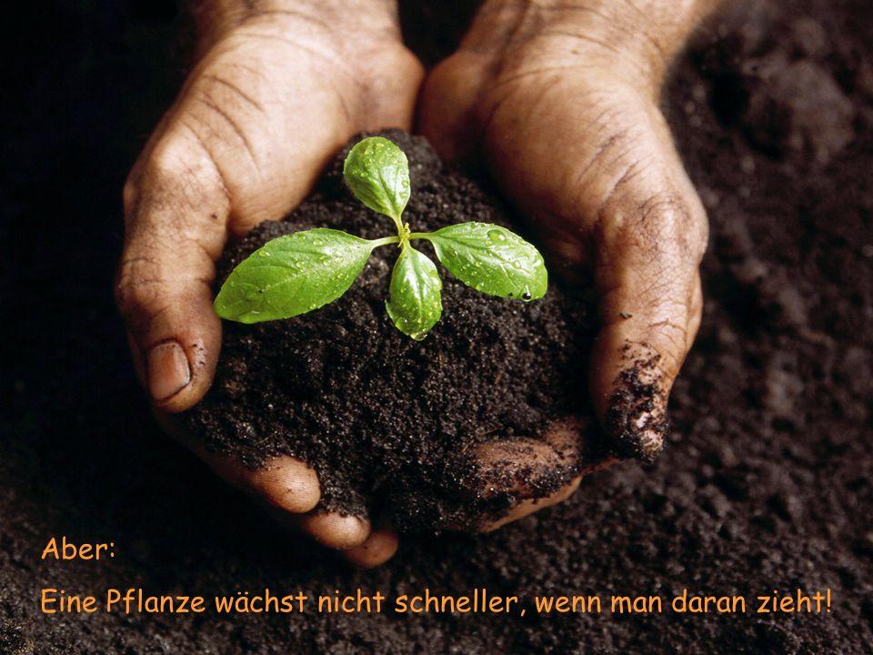 Aber: Eine Pflanze wächst nicht schneller, wenn man daran zieht!