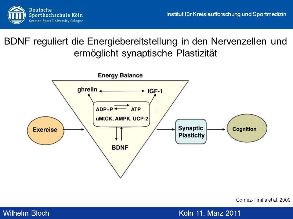 Wilhelm BlochAltenberg, 19. November 2010 Institut für Kreislaufforschung und Sportmedizin Wilhelm BlochKöln 11. März 2011 BDNF reguliert die Energieb