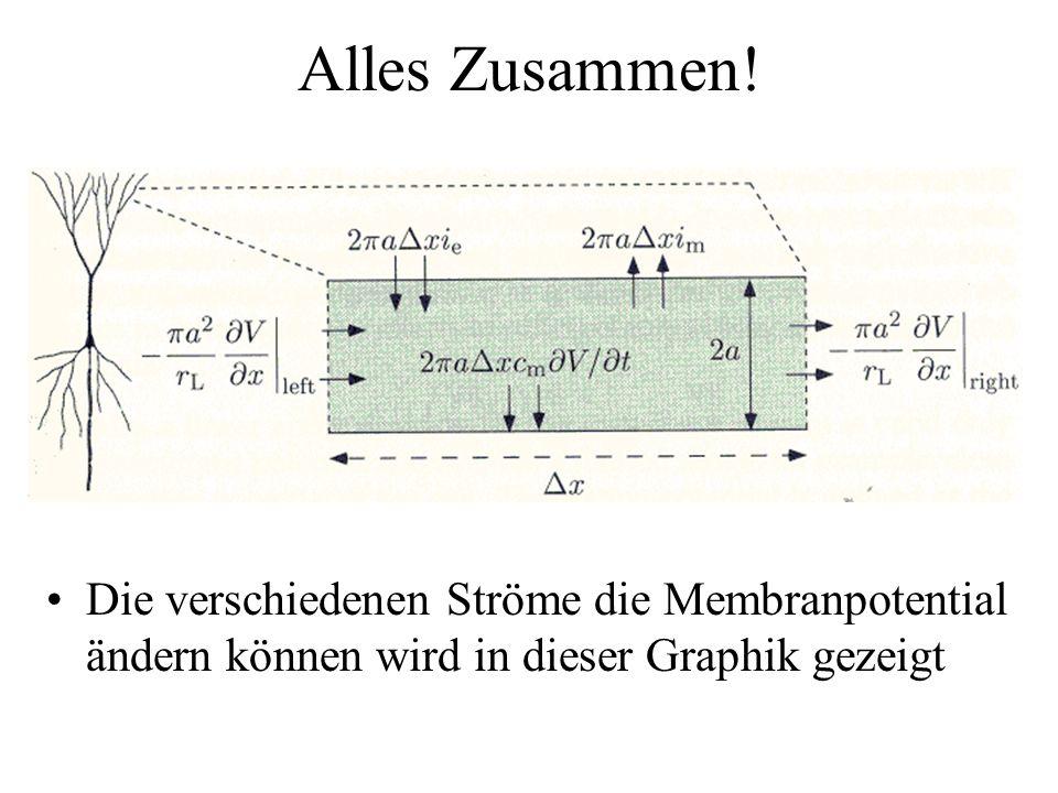 Alles Zusammen! Die verschiedenen Ströme die Membranpotential ändern können wird in dieser Graphik gezeigt