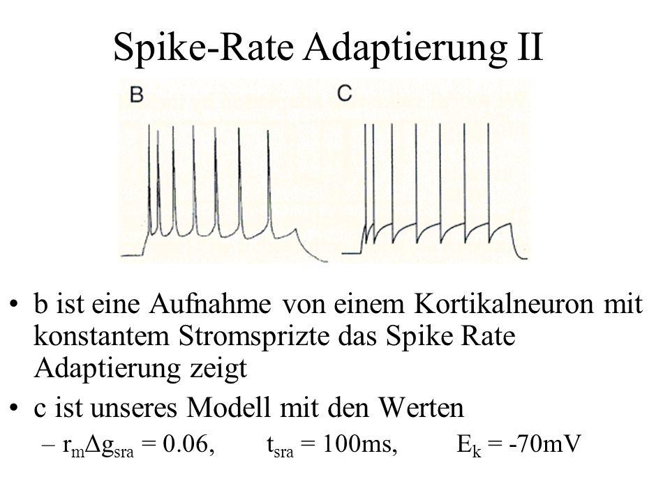 b ist eine Aufnahme von einem Kortikalneuron mit konstantem Stromsprizte das Spike Rate Adaptierung zeigt c ist unseres Modell mit den Werten –r m Δg