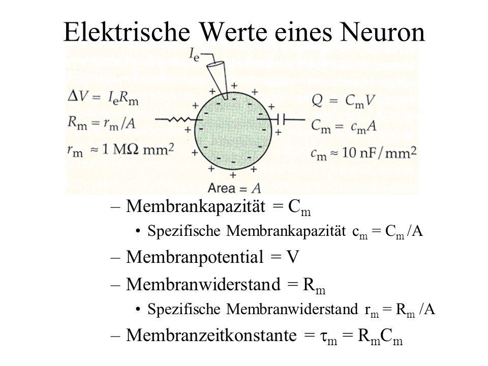 Elektrische Werte eines Neuron –Membrankapazität = C m Spezifische Membrankapazität c m = C m /A –Membranpotential = V –Membranwiderstand = R m Spezif