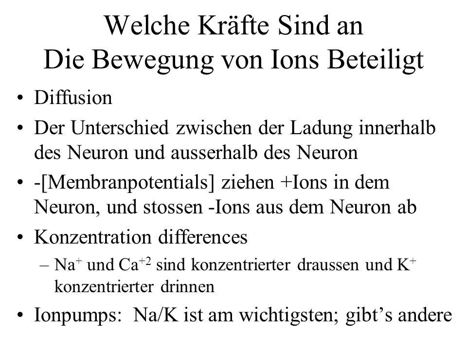 Welche Kräfte Sind an Die Bewegung von Ions Beteiligt Diffusion Der Unterschied zwischen der Ladung innerhalb des Neuron und ausserhalb des Neuron -[M