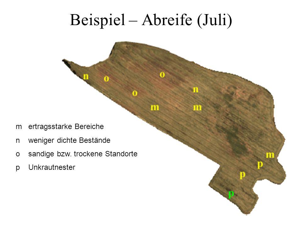 Beispiel – Abreife (Juli) m ertragsstarke Bereiche n weniger dichte Bestände o sandige bzw. trockene Standorte p Unkrautnester