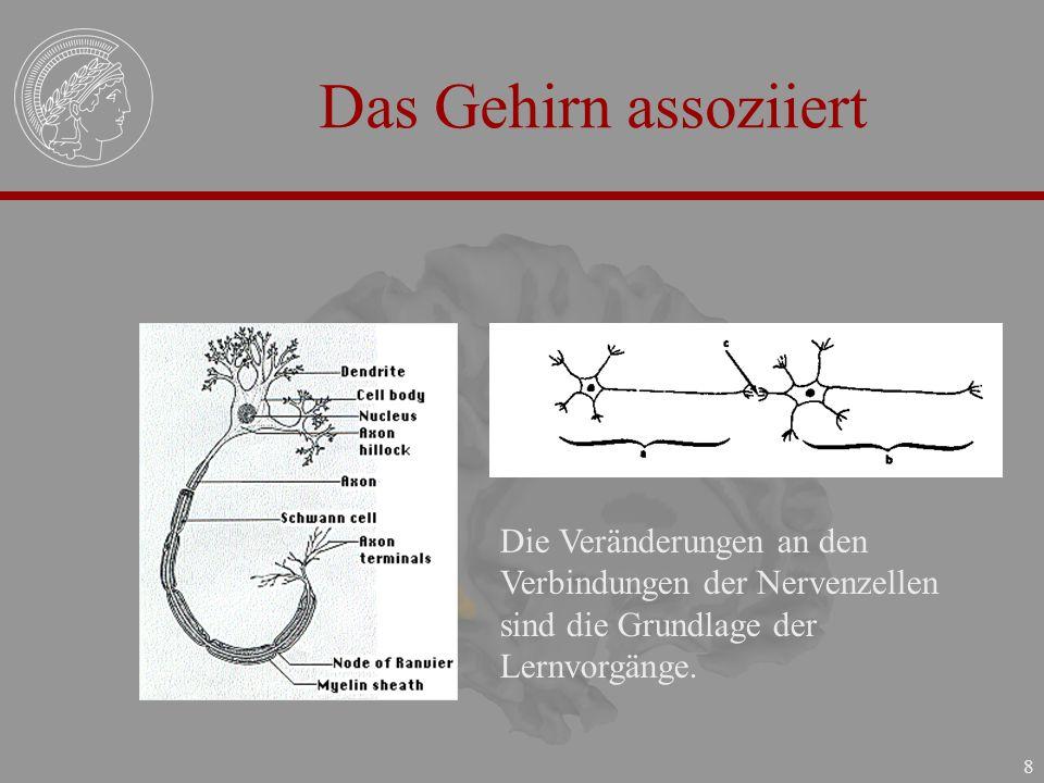 8 Das Gehirn assoziiert Die Veränderungen an den Verbindungen der Nervenzellen sind die Grundlage der Lernvorgänge.