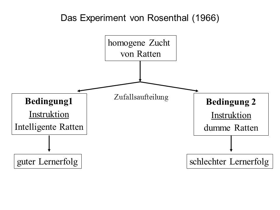 Das Experiment von Rosenthal (1966) homogene Zucht von Ratten Bedingung1 Instruktion Intelligente Ratten Bedingung 2 Instruktion dumme Ratten guter Le