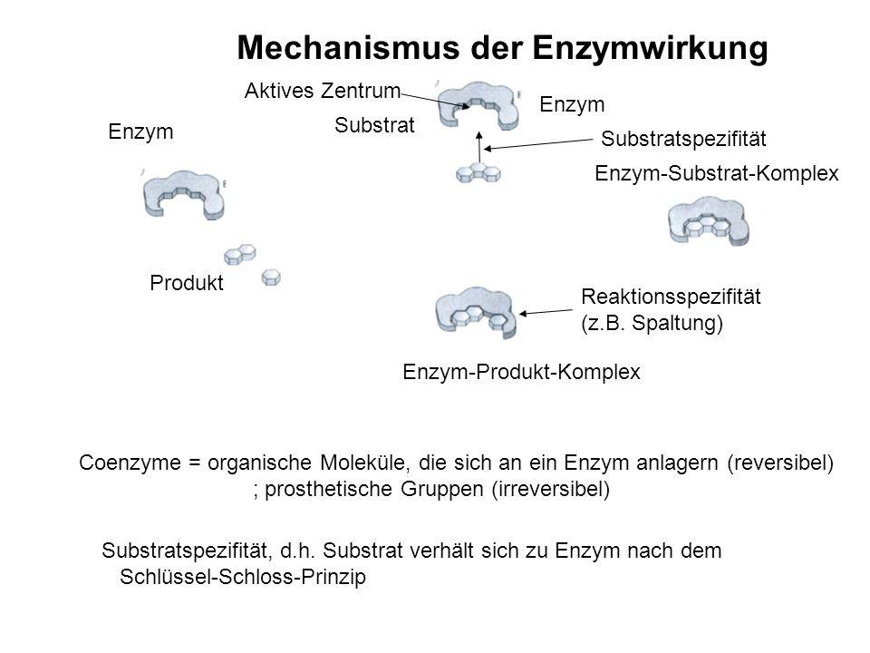Mechanismus der Enzymwirkung Substratspezifität Reaktionsspezifität (z.B. Spaltung) Substrat Enzym Enzym-Substrat-Komplex Enzym-Produkt-Komplex Produk
