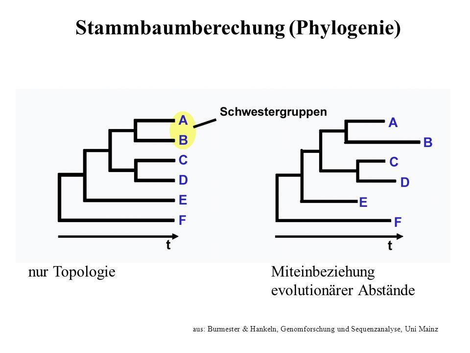 nur TopologieMiteinbeziehung evolutionärer Abstände aus: Burmester & Hankeln, Genomforschung und Sequenzanalyse, Uni Mainz Stammbaumberechung (Phyloge