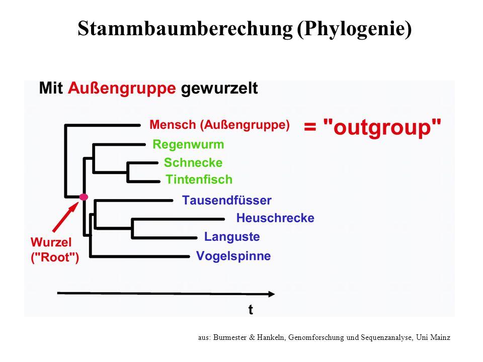 aus: Burmester & Hankeln, Genomforschung und Sequenzanalyse, Uni Mainz Stammbaumberechung (Phylogenie)