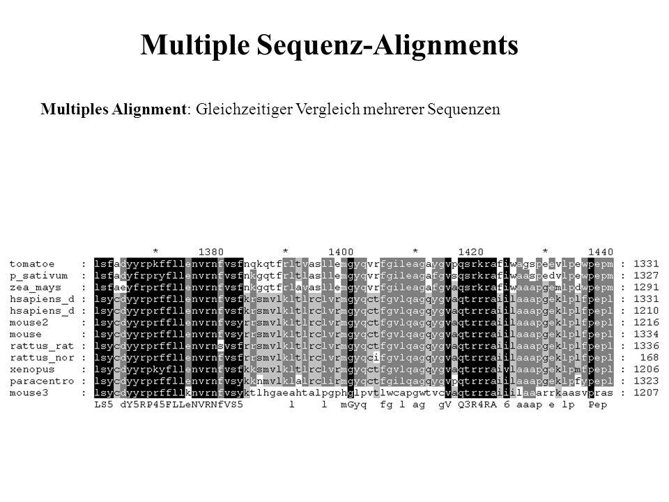 Multiple Sequenz-Alignments Multiples Alignment: Gleichzeitiger Vergleich mehrerer Sequenzen Anwendungen: Funktionsvorhersage, Suche nach konservierten Motiven Datenbanksuche (z.