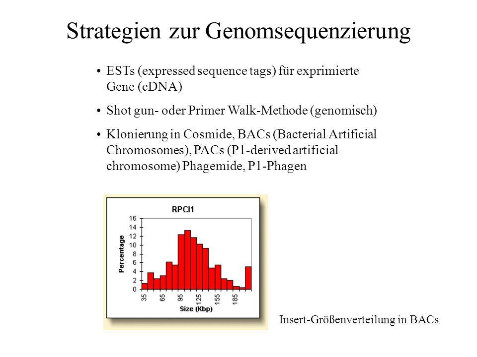 Von der Karte zum Genom