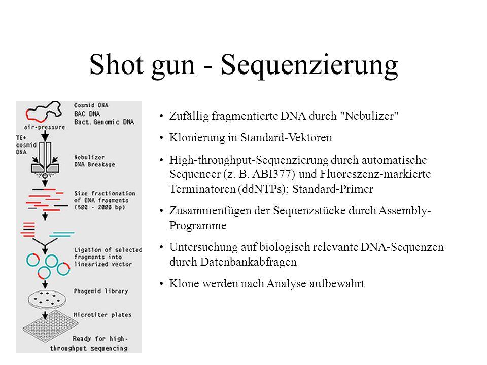 Strategien zur Genomsequenzierung ESTs (expressed sequence tags) für exprimierte Gene (cDNA) Shot gun- oder Primer Walk-Methode (genomisch) Klonierung