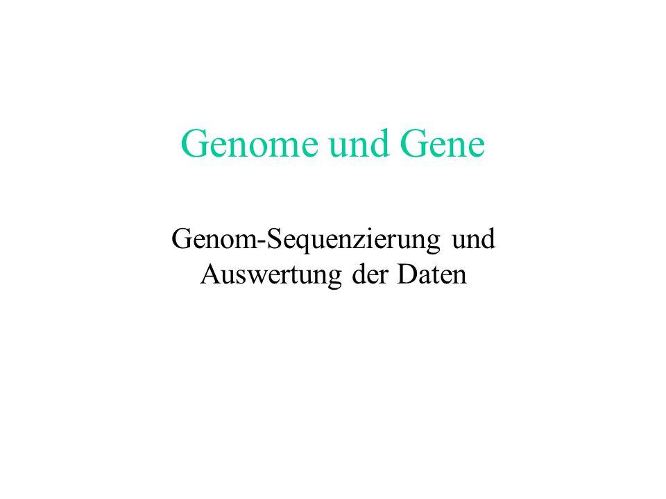 Vorlesung Bioinformatik Teil II Genomics 04.06.: Genomstrukturen, Sequenzierprojekte 11.06.: Annotation, Datenbanken und Datenbanksuche 18.06.: Paarwe