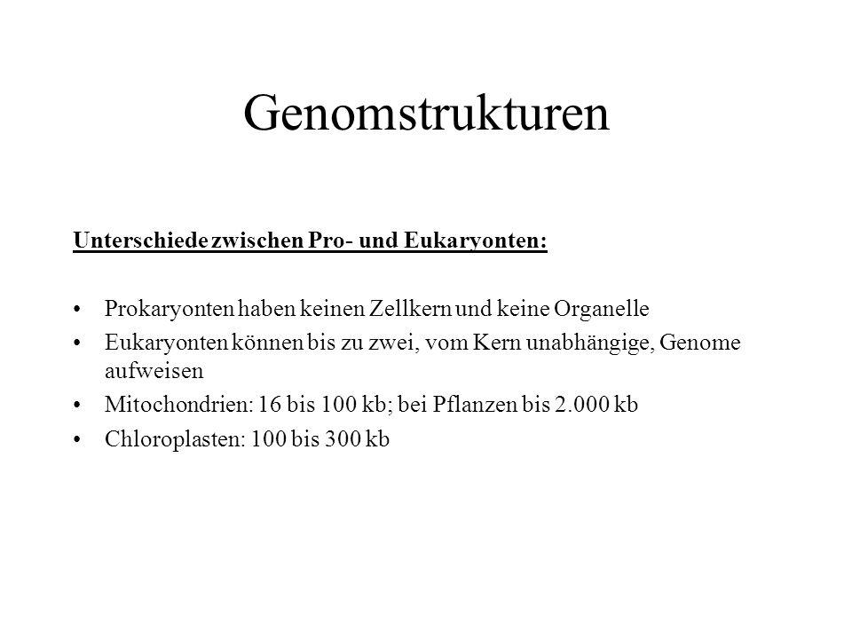 Genomstrukturen Unterschiede zwischen Pro- und Eukaryonten: Prokaryonten haben keinen Zellkern und keine Organelle Eukaryonten können bis zu zwei, vom Kern unabhängige, Genome aufweisen Mitochondrien: 16 bis 100 kb; bei Pflanzen bis 2.000 kb Chloroplasten: 100 bis 300 kb