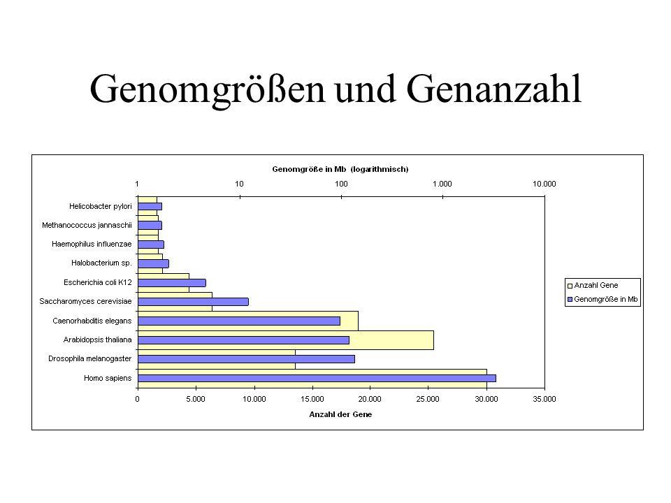 Aufbau des GenBank-Flatfiles 2.