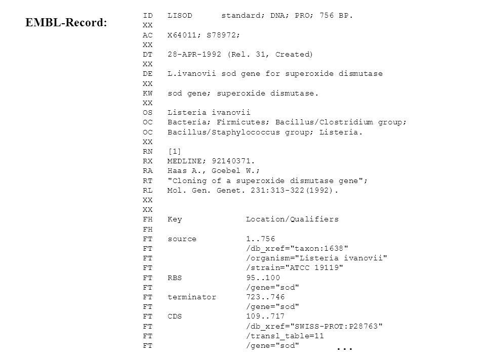Aufbau des GenBank-Flatfiles 3. Sequenz: - Formatierte DNA-Sequenz (10er Blöcke zur Übersichtlichkeit) - mit Basenzählung - durchnummeriert - Bsp.: BA