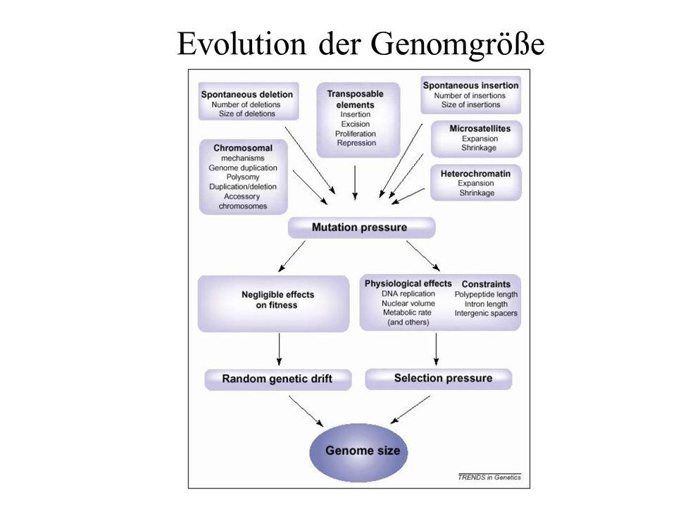 Evolution der Genomgröße