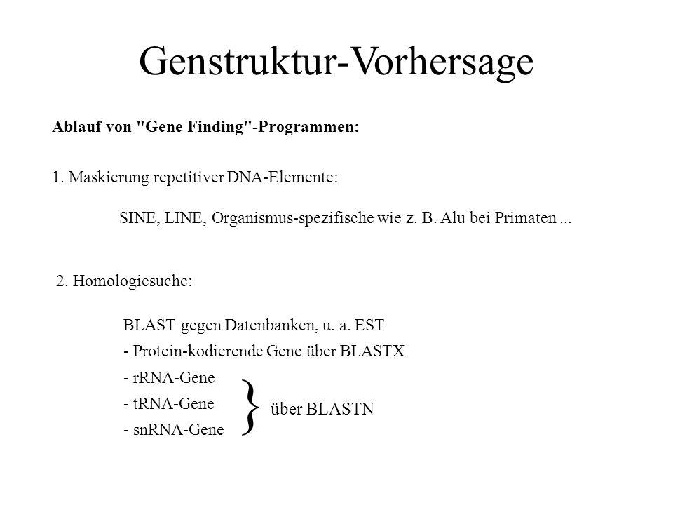 Genstruktur-Vorhersage Testansatz von Fickett & Tung, 1992: - GenBank unterteilt in 108 bp-Fenster ohne Überlappungen - nur die Fenster weiterverwende