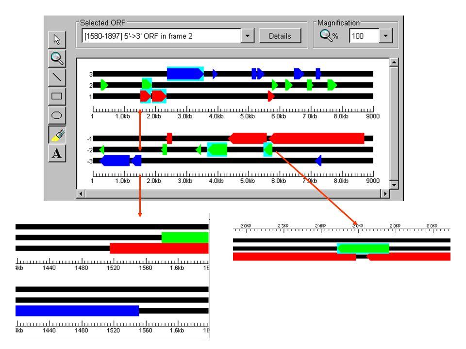 Genstruktur-Vorhersage Ablauf von