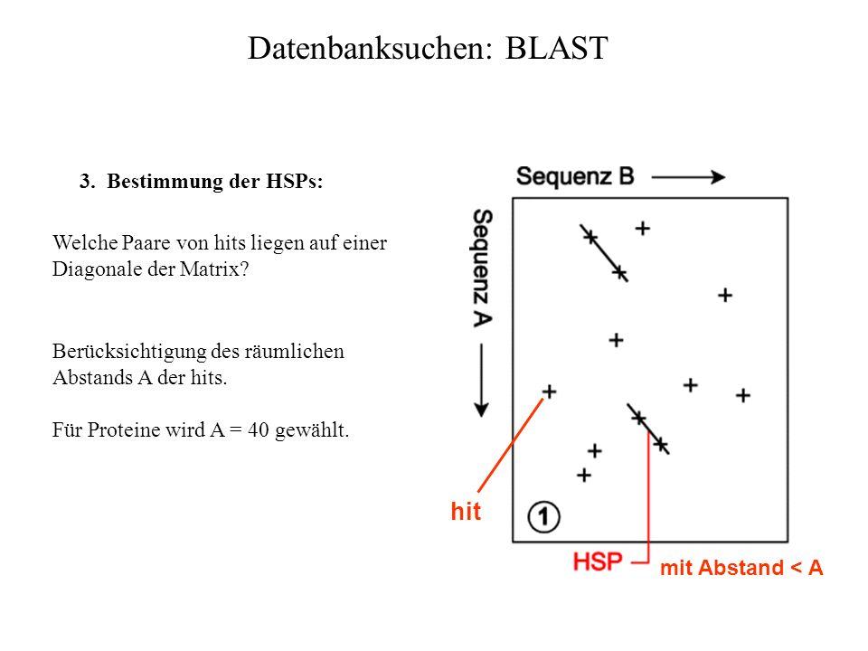 Datenbanksuchen: BLAST 2. Lokalisierung der hits: Vergleichssequenz aus der Datenbank wird auf das Vorkommen der w-mere hin untersucht. Von jedem hit