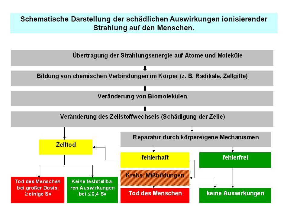 Schematische Darstellung der schädlichen Auswirkungen ionisierender Strahlung auf den Menschen.