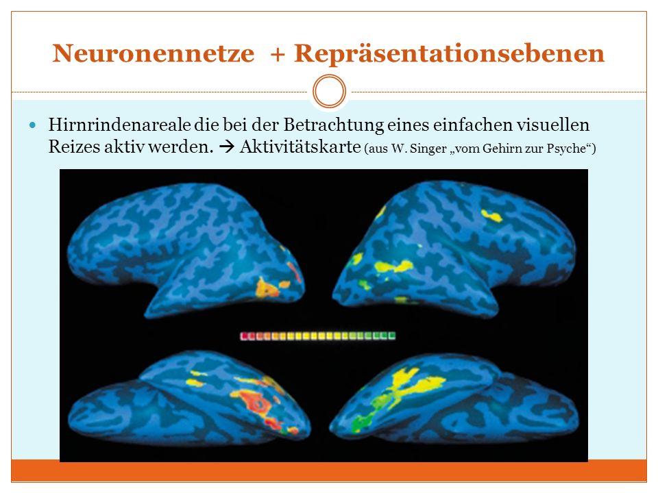 Neuronennetze + Repräsentationsebenen Hirnrindenareale die bei der Betrachtung eines einfachen visuellen Reizes aktiv werden. Aktivitätskarte (aus W.