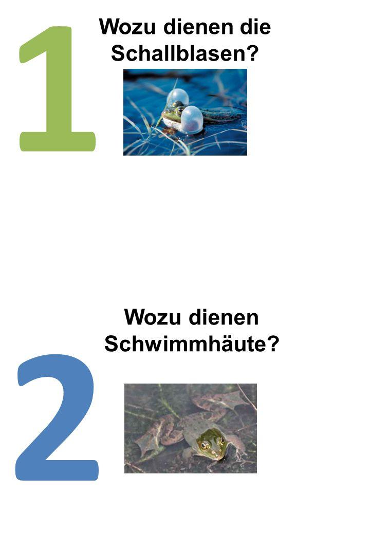 Wozu dienen die Schallblasen? 1 Wozu dienen Schwimmhäute? 2