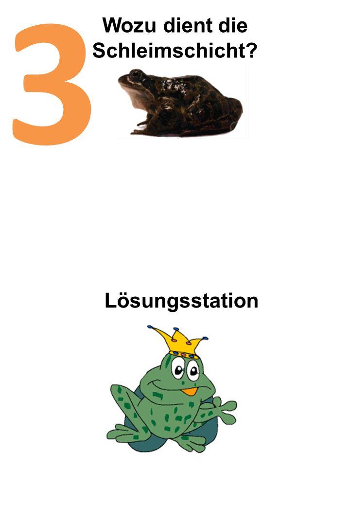 Wozu dient die Schleimschicht? 3 Lösungsstation