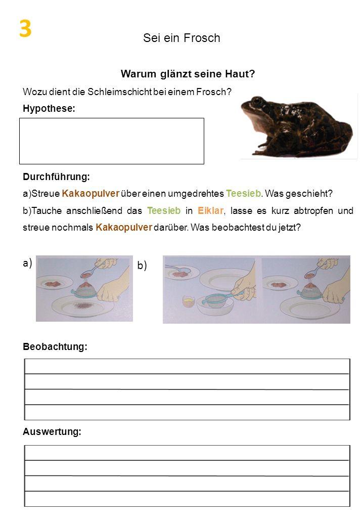 Sei ein Frosch Warum glänzt seine Haut? Wozu dient die Schleimschicht bei einem Frosch? Hypothese: Durchführung: a)Streue Kakaopulver über einen umged