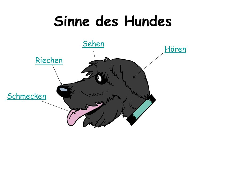 Sinne des Hundes Riechen Sehen Hören Schmecken
