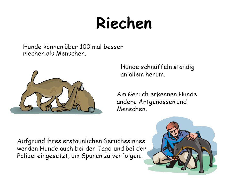 Riechen Aufgrund ihres erstaunlichen Geruchssinnes werden Hunde auch bei der Jagd und bei der Polizei eingesetzt, um Spuren zu verfolgen. Hunde können