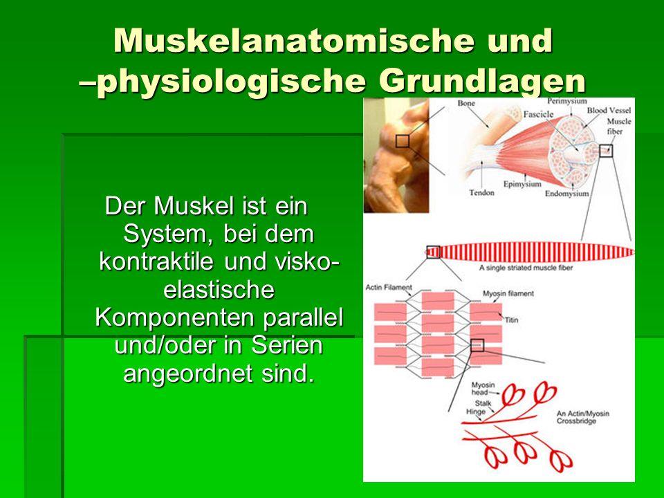 Muskelanatomische und –physiologische Grundlagen Der Muskel ist ein System, bei dem kontraktile und visko- elastische Komponenten parallel und/oder in
