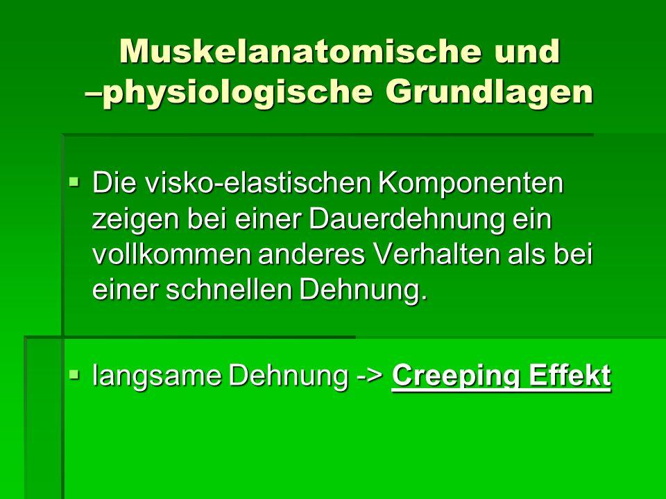 Muskelanatomische und –physiologische Grundlagen Die visko-elastischen Komponenten zeigen bei einer Dauerdehnung ein vollkommen anderes Verhalten als