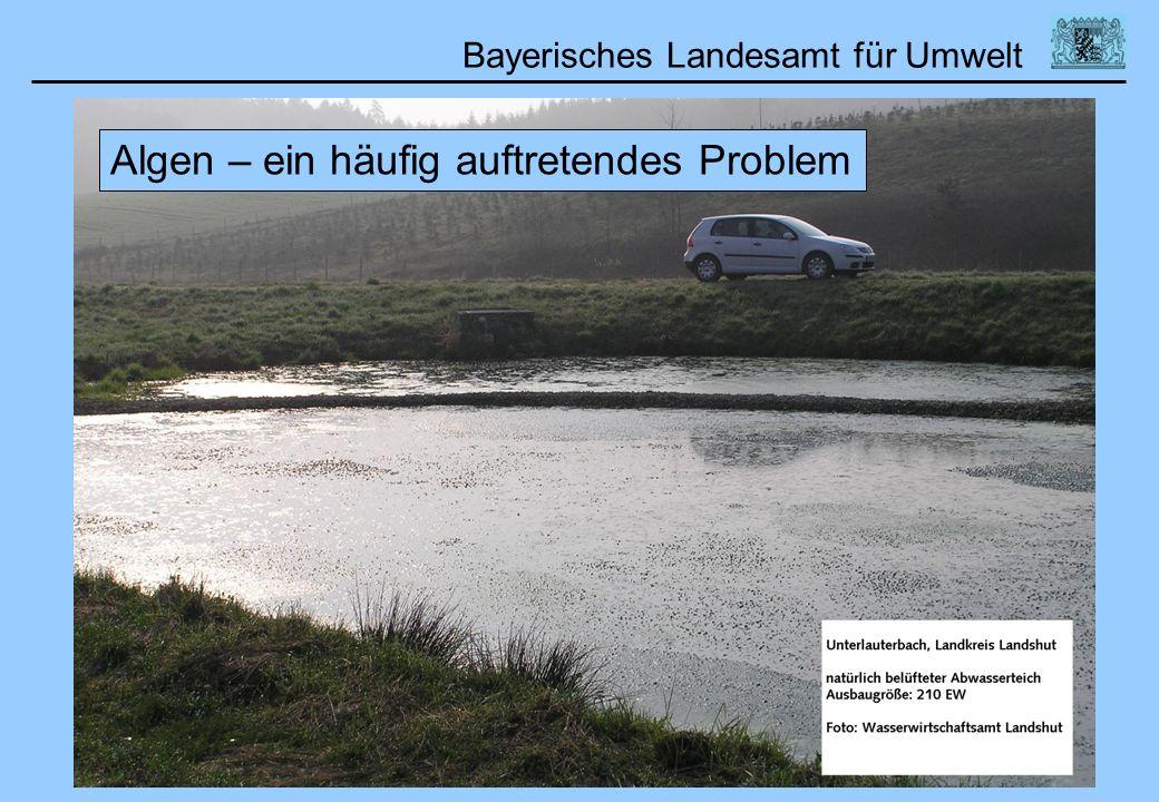 Bayerisches Landesamt für Umwelt Algen – ein häufig auftretendes Problem