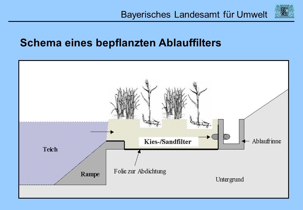 Bayerisches Landesamt für Umwelt Schema eines bepflanzten Ablauffilters