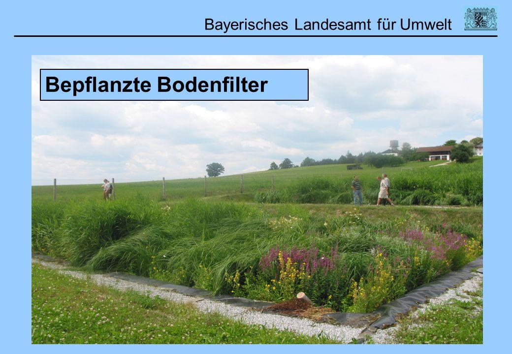 Bayerisches Landesamt für Umwelt 01.02.2006DWA Lehrertag Bepflanzte Bodenfilter