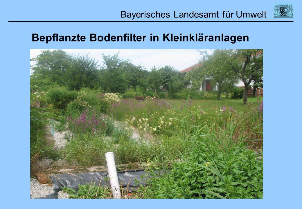 Bayerisches Landesamt für Umwelt 01.02.2006DWA Lehrertag Bepflanzte Bodenfilter in Kleinkläranlagen