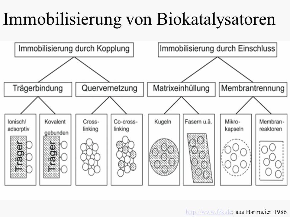 Immobilisierung von Biokatalysatoren http://www.fzk.dehttp://www.fzk.de; aus Hartmeier 1986