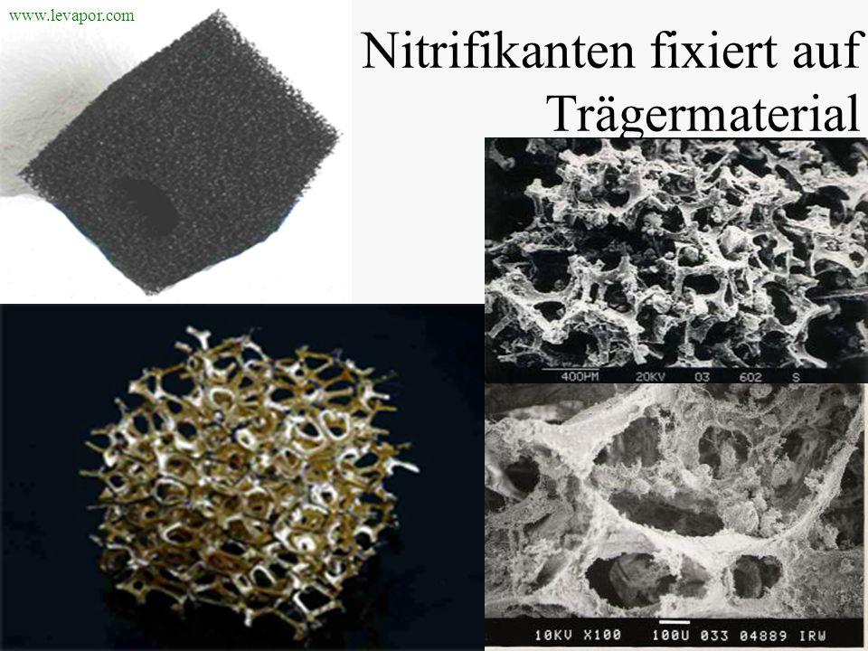 Nitrifikanten fixiert auf Trägermaterial www.levapor.com