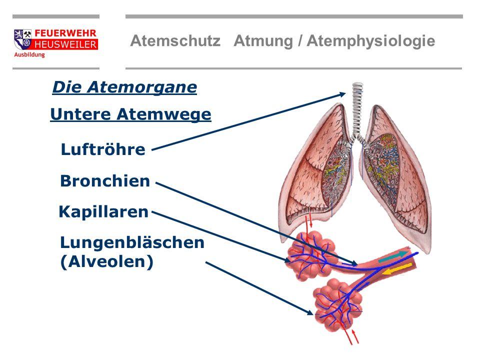 Atemschutz Atmung / Atemphysiologie Die Atemorgane Nase Mund Rachen Obere Atemwege