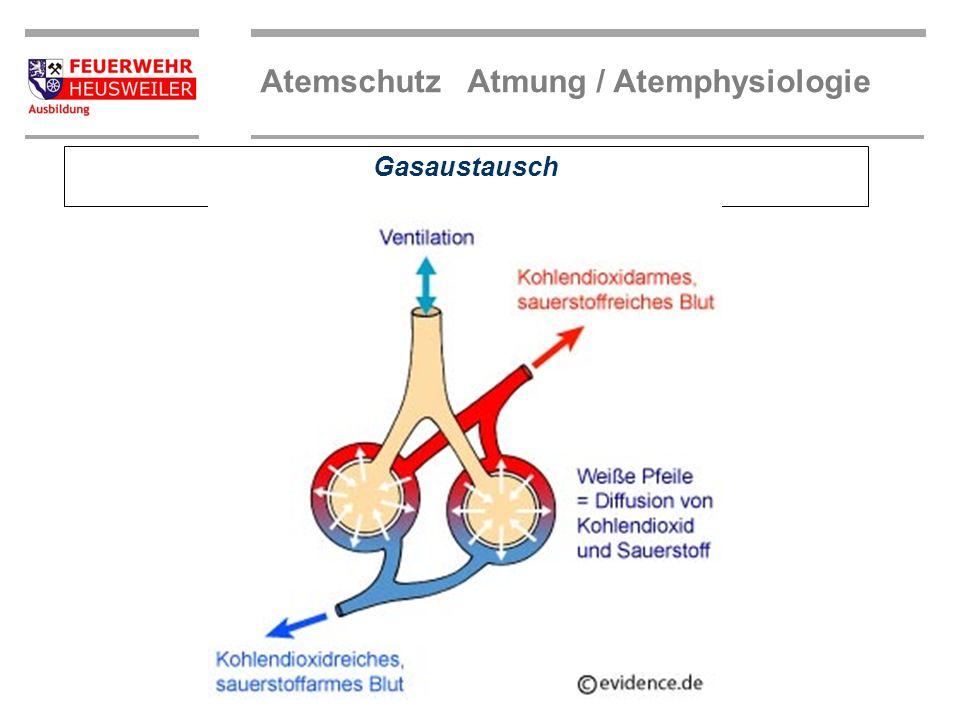 Atemschutz Atmung / Atemphysiologie Die Atemorgane Luftröhre Bronchien Kapillaren Lungenbläschen (Alveolen) Untere Atemwege