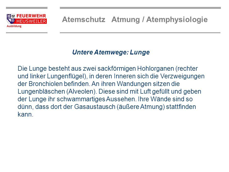 Atemschutz Atmung / Atemphysiologie Gasaustausch