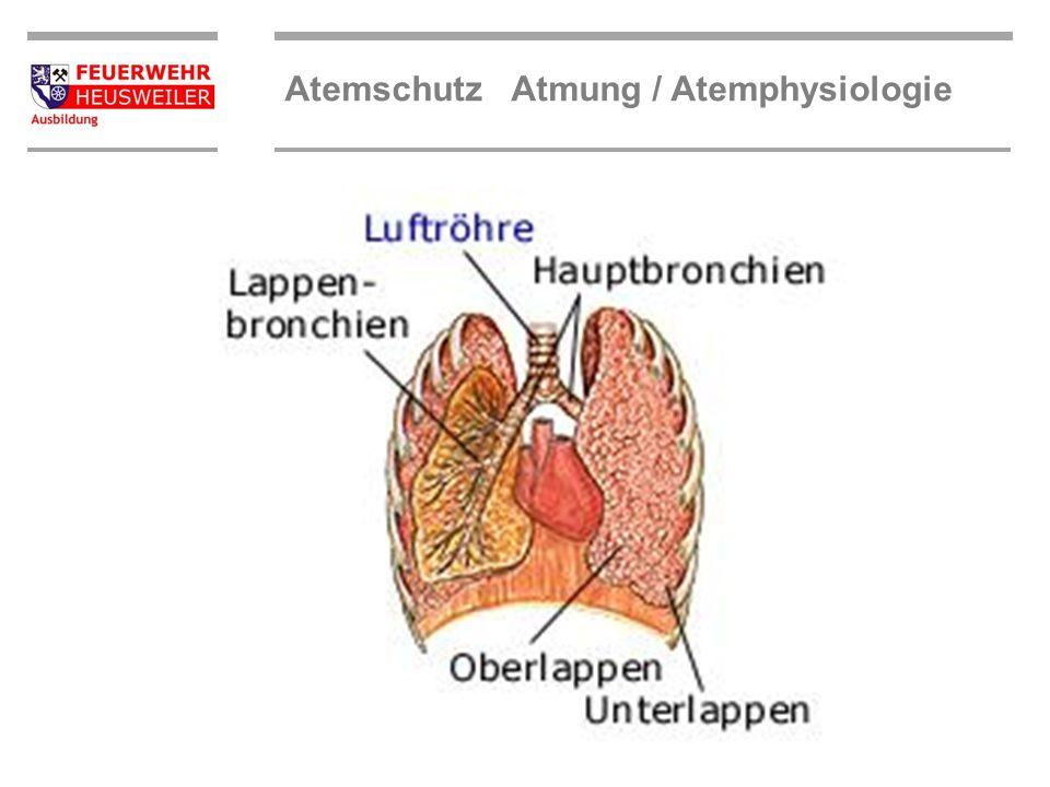 Atemschutz Atmung / Atemphysiologie Die Lunge besteht aus zwei sackförmigen Hohlorganen (rechter und linker Lungenflügel), in deren Inneren sich die V