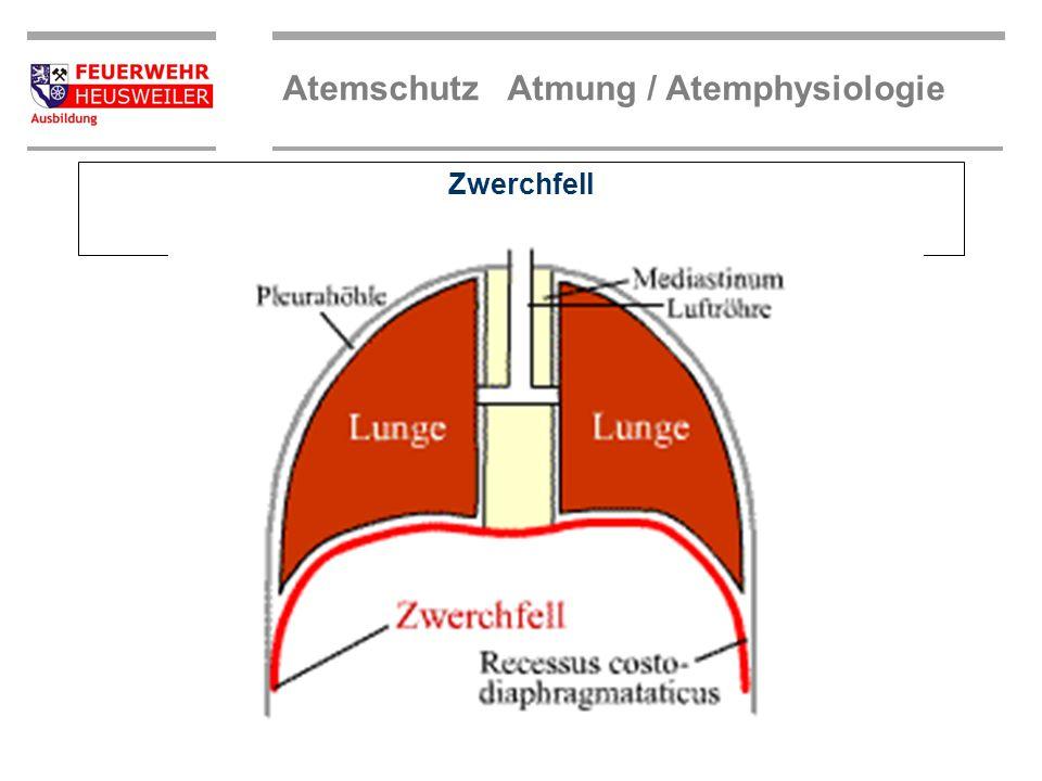 Atemvorgang Beim Einatemvorgang wird die Luft über die Atemwege der Lunge zugeführt. Dabei senkt sich das Zwerchfell, das den Brustraum vom Bauchraum