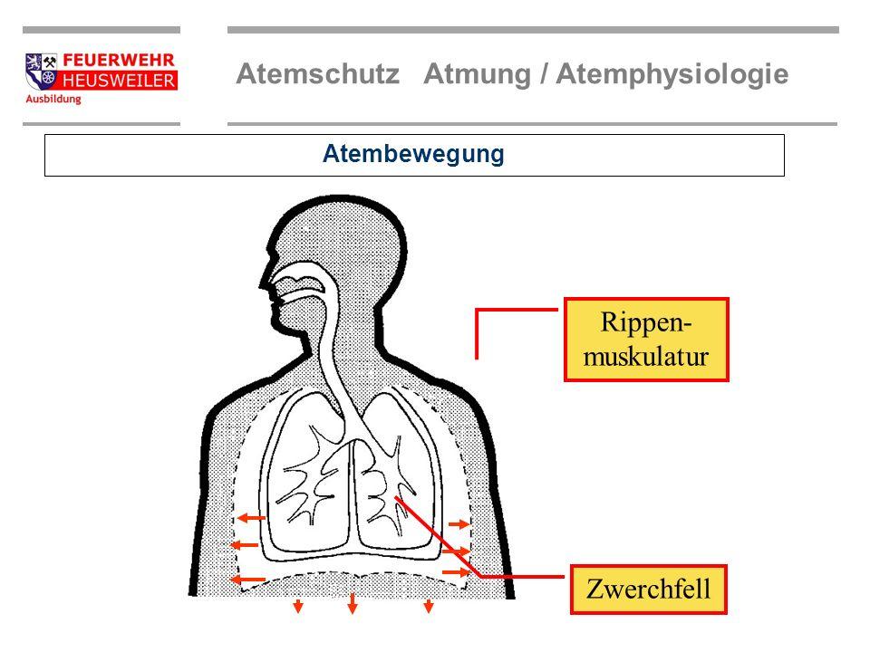 Atemschutz Atmung / Atemphysiologie Zwerchfell