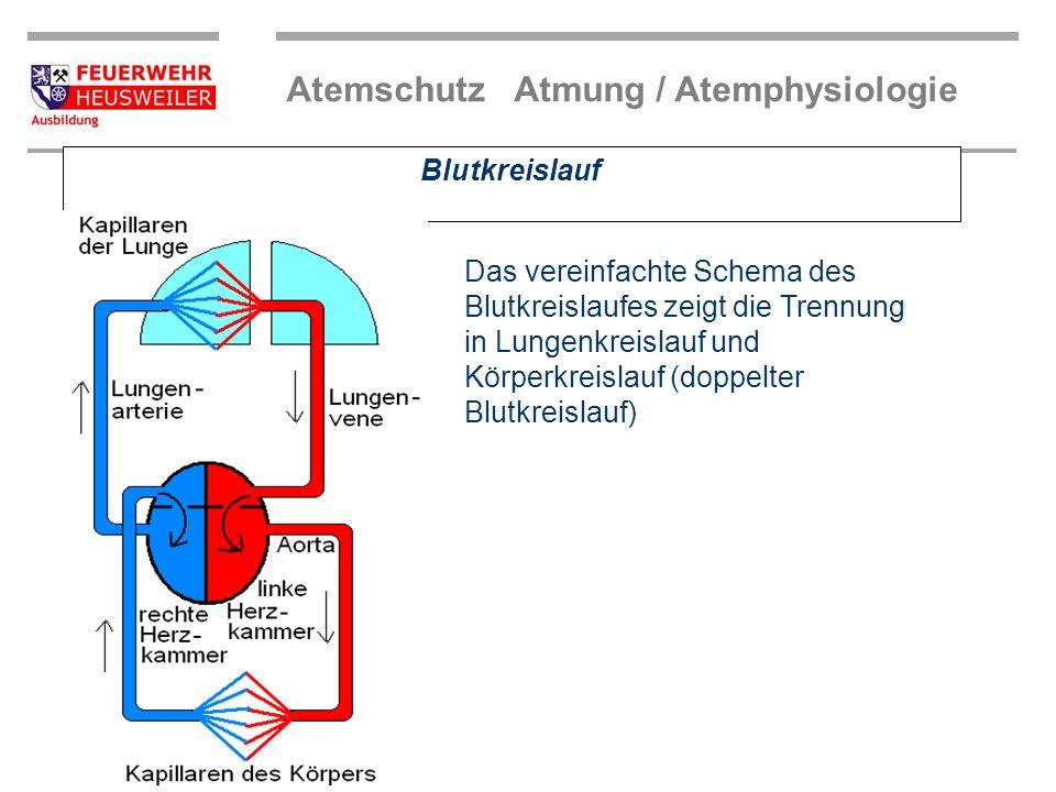 Atemschutz Atmung / Atemphysiologie Atembewegung Rippen- muskulatur Zwerchfell