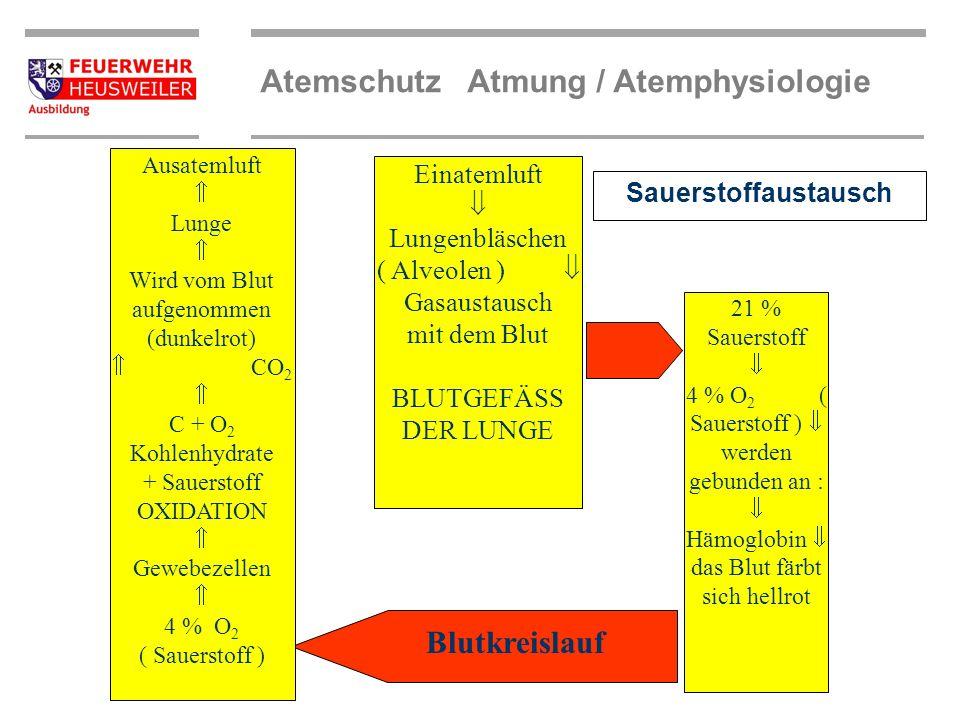 Atemschutz Atmung / Atemphysiologie Kreislaufschema Den Weg, den das Blut über die Arterien und Venen im Körper zurücklegt, wird in den großen Blutkre
