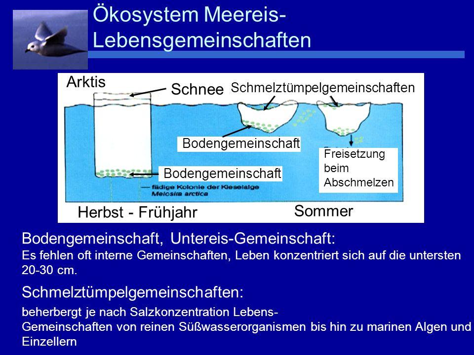 Niedrige Temperaturen und hohe Salzkonzentration Salzgehalt in den Kanälchen abhängig von Temperatur: -4°C ~ 70 o / oo -10°C ~ 145 o / oo –Kieselalgen wachsen noch bei -5,5°C und 95 o / oo –überleben Temperaturen bis -10°C und Salzkonzentrationen von 145 o / oo –Schützende Substanzen: Prolin, anorganische Ionen, Glyzerin (verhindern Eiskristallbildung im Zellinnern) Lichtmangel –30 cm dicke Schneedecke verringert die Lichtmenge auf ein Zwanzigstel.